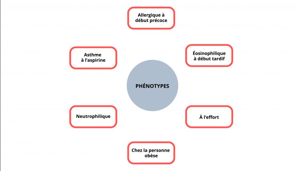 L'allergique à début précoce, l'éosinophilique à début tardif, à l'effort, chez la personne obèse, neutrophilique et l'asthme à l'aspirine